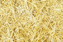 Textura amarilla seca del fondo de la hierba de la paja después de la más havest Foto de archivo libre de regalías