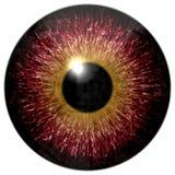 Textura animal del globo del ojo 3d aislada fotos de archivo