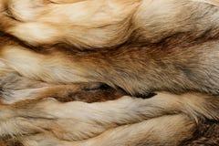 Textura animal natural del fondo de la piel primer amarillo de las lanas del zorro fotografía de archivo