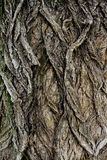 Textura antiga da casca imagem de stock