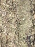 Textura ascendente del cierre de la corteza de árbol Fotos de archivo libres de regalías
