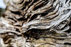 Textura ascendente del cierre de la corteza de árbol con el fondo defocused Imagen de archivo libre de regalías