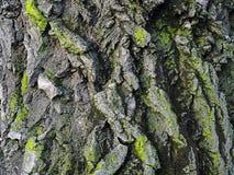Textura asombrosa del árbol Imagen de archivo