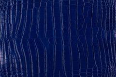 Textura azul do couro do crocodilo Fotos de Stock