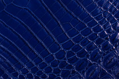 Textura azul do couro do crocodilo Imagens de Stock Royalty Free