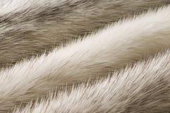 Textura blanca de la piel del visión fotografía de archivo libre de regalías
