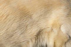 Textura blanca de la superficie del pelo de perro fotografía de archivo