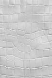 Textura blanca del cuero del cocodrilo Imagen de archivo