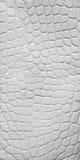 Textura blanca del cuero del cocodrilo Fotografía de archivo