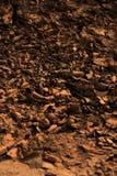 Textura bonita Fotos de Stock