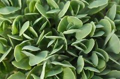 Textura bonita com planta fotografia de stock royalty free