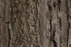 Textura bonita da casca de árvore velha Foto de Stock