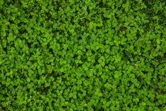 Textura bonita da grama verde fotos de stock