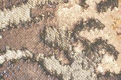 Textura bonita da lantejoula com div?rcios que olhares como escalas de peixes imagem de stock