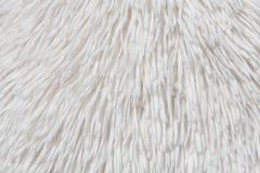 Textura branca da pele Fotos de Stock