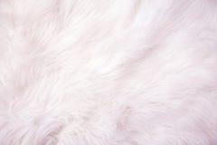 Textura branca do fundo do algodão Fotos de Stock