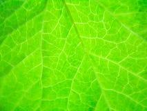 Textura brillante de la hoja Imagen de archivo