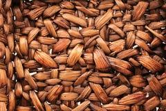 Textura brown Stock Image