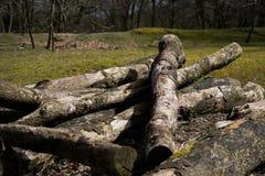 Textura caida de Forest Sand Leafes Old Mossy del inicio de sesión del árbol Foto de archivo libre de regalías