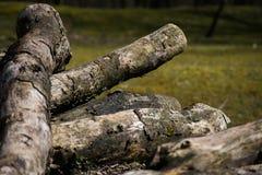 Textura caida de Forest Sand Leafes Old Mossy del inicio de sesión del árbol Foto de archivo
