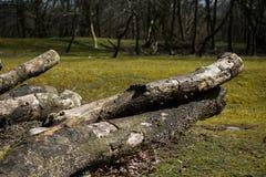 Textura caida de Forest Sand Leafes Old Mossy del inicio de sesión del árbol Fotografía de archivo