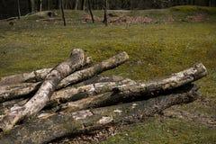 Textura caida de Forest Sand Leafes Old Mossy del inicio de sesión del árbol Imagen de archivo libre de regalías