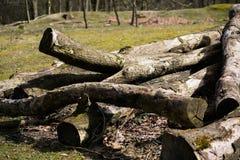 Textura caida de Forest Sand Leafes Old Mossy del inicio de sesión del árbol Fotografía de archivo libre de regalías