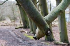 Textura caida de Forest Sand Leafes Old Mossy del inicio de sesión del árbol Fotos de archivo