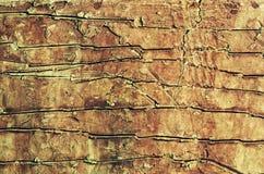 Textura cerâmica Fotografia de Stock