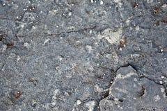 Textura cinzenta da rocha Imagens de Stock