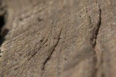 Textura cinzenta do fundo da superfície da madeira de carvalho Fotos de Stock Royalty Free