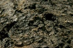 Textura cinzenta do fundo da superfície da madeira de carvalho Fotografia de Stock