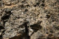 Textura cinzenta do fundo da superfície da madeira de carvalho Imagem de Stock Royalty Free