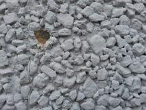 Textura clara da superfície de Grey Architectural foto de stock
