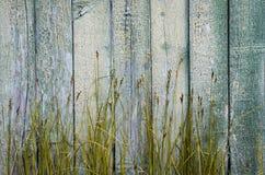 Textura coloreada de madera Imagen de archivo