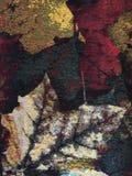 Textura colorida Imagenes de archivo