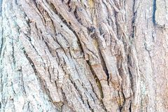 Textura colorida clara da casca de árvore foto de stock royalty free