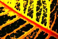 Textura colorida da folha Foto de Stock