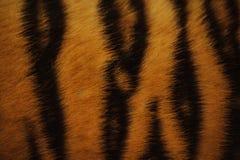 Textura colorida da pele bonita do tigre com alaranjado, o bege, o amarelo e o preto Imagens de Stock Royalty Free