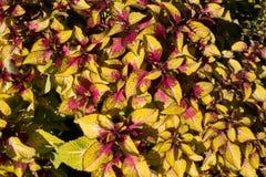 Textura colorida das flores Fotos de Stock