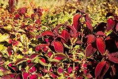 Textura colorida das flores Imagem de Stock