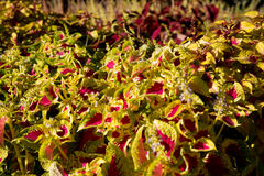 Textura colorida das flores Imagem de Stock Royalty Free