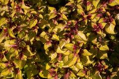 Textura colorida das flores Fotografia de Stock