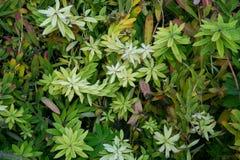 Textura colorida das folhas no outono Foto de Stock