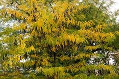 Textura colorida das folhas no outono Fotografia de Stock Royalty Free