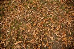 Textura colorida das folhas no outono Foto de Stock Royalty Free