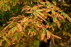 Textura colorida das folhas no outono Fotos de Stock