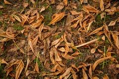 Textura colorida das folhas no outono Imagem de Stock Royalty Free