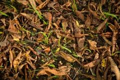 Textura colorida das folhas no outono Fotografia de Stock