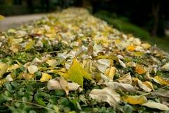 Textura colorida das folhas no outono Imagens de Stock Royalty Free